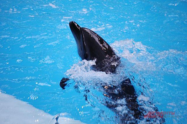 Дельфинов осмотрят специалисты.