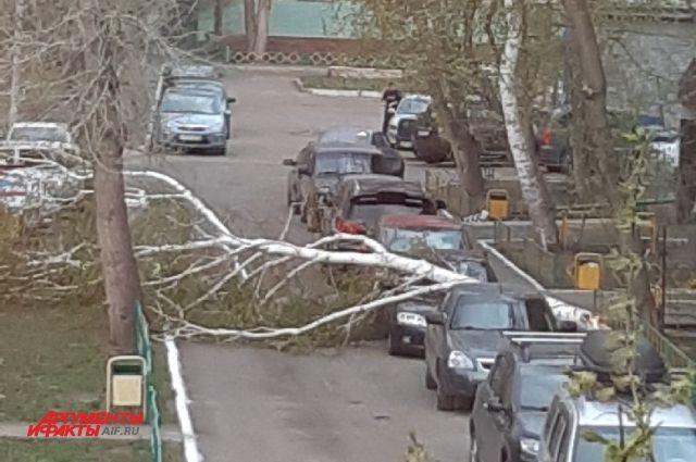 В Оренбурге ветер повалил березу на припаркованный автомобиль