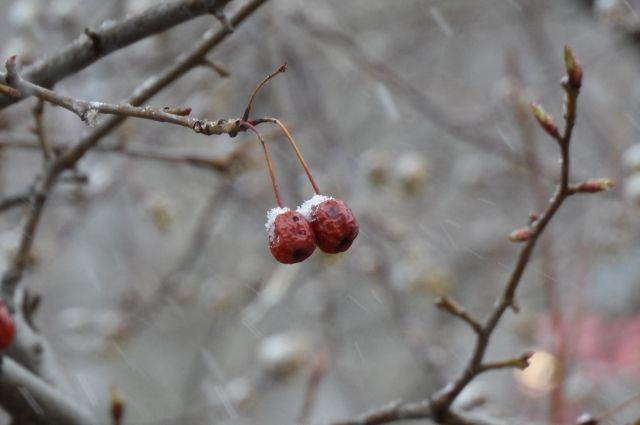 В Оренбуржье в нескольких районах выпал снег