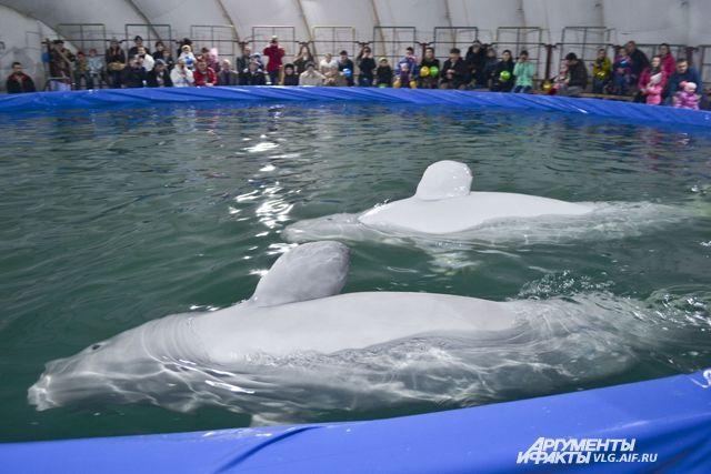 Митинг за запрет дельфинариев пройдёт в Ижевске 7 мая