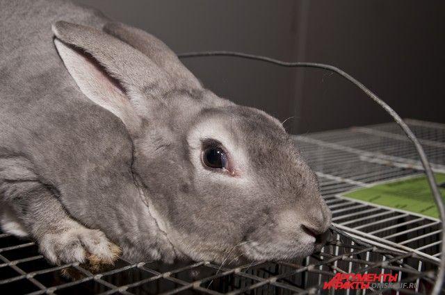 В Оренбуржье в силе оставлен приговор мошенникам-животноводам