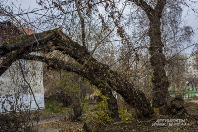 Штормовой ветер снес крыши, деревья и остановку в Новосибирске