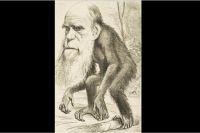 Карикатура на Чарльза Дарвина, 1871 год