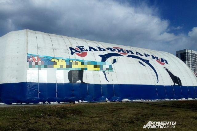 Дельфинарий приехал в Ижевск на этой неделе.