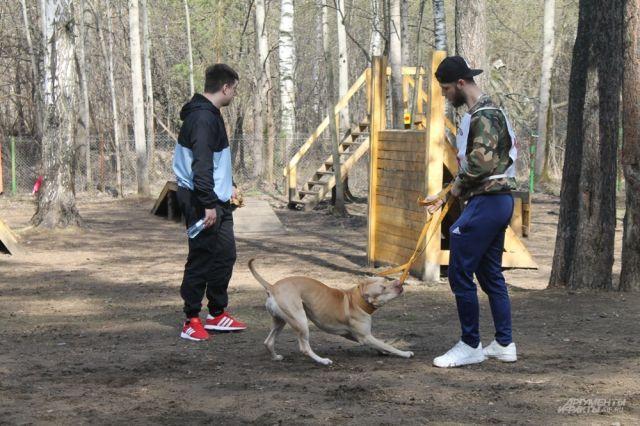 5dc9bdabbdc64 В Перми прошли Всероссийские соревнования для собак-тяжелоатлетов. В  мероприятии приняли участие собаки разных пород