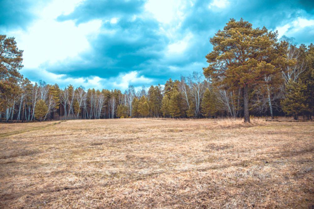 В годы войны тогучинцы спасли этот лес недалеко Тогучинского санатория от вырубки.