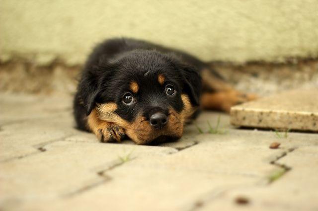 Бездомным животным требуется помощь.