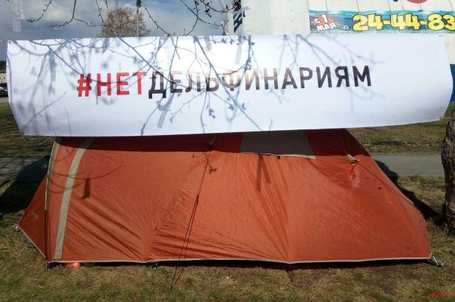 В Ижевске прошел митинг против передвижных дельфинариев