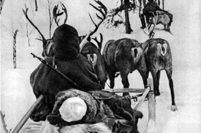 Животные перевезли к переднему краю 8тысяч бойцов и 17 тысяч тонн боеприпасов.