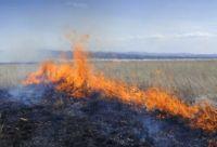 На месте работали пожарные, которые смогли потушить пламя только к вечеру.