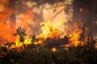 Где в Оренбургской области горели леса и степи?