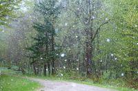 Снег смотрелся контрастно на фоне уже распустившихся цветов на клумбах и зеленых листьев на деревьях.