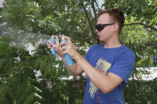 Пока что в Алтайском крае заметно меньше комаров, чем годом ранее