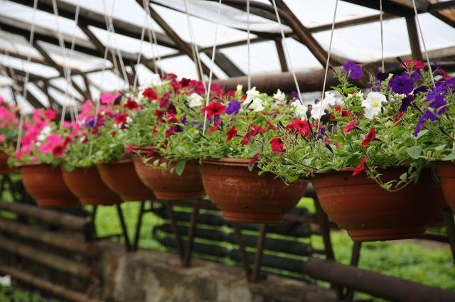 На центральных улицах и в скверах установят тысячу цветочных вазонов.