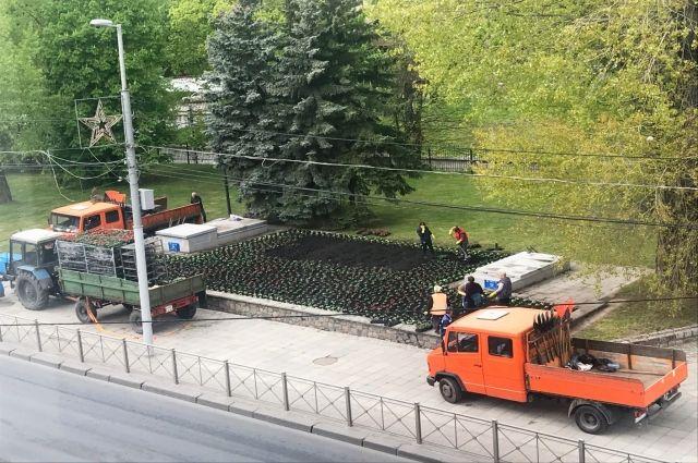 До 1 июня на клумбы Калининграда высадят 443 тысячи цветов
