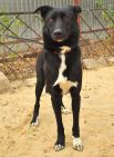 Оливия - умная и ласковая собачка. Привита и стерилизована.