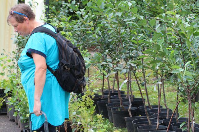В Калининградской области создан первый плодово-ягодный питомник