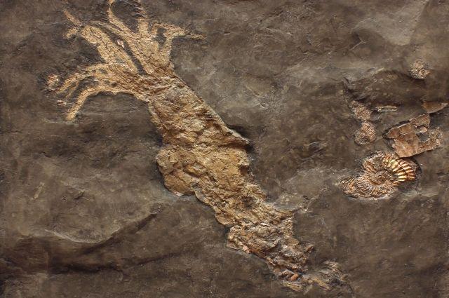 17 мая в Музее Мирового океана можно будет перенестись на сотни миллионов лет назад