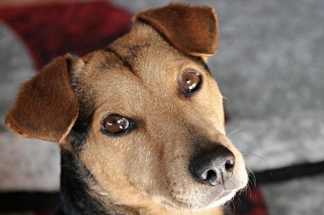 Бузулучанка осуждена за то, что натравила собаку на полицейского
