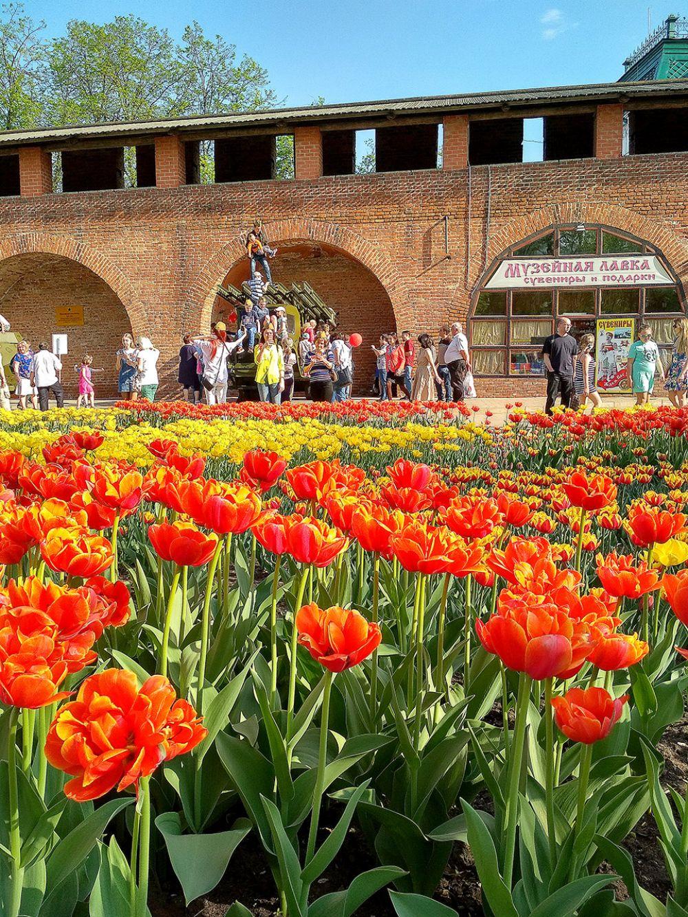 Кремль «оделся» в яркие краски тюльпанов.