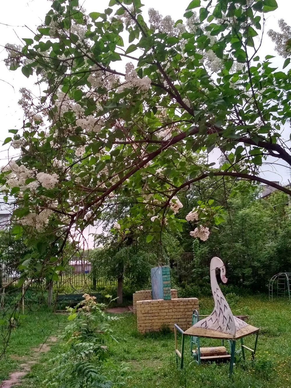 Аромат черемухи стелется по дворам, наполняя теплом и радостью сердца.