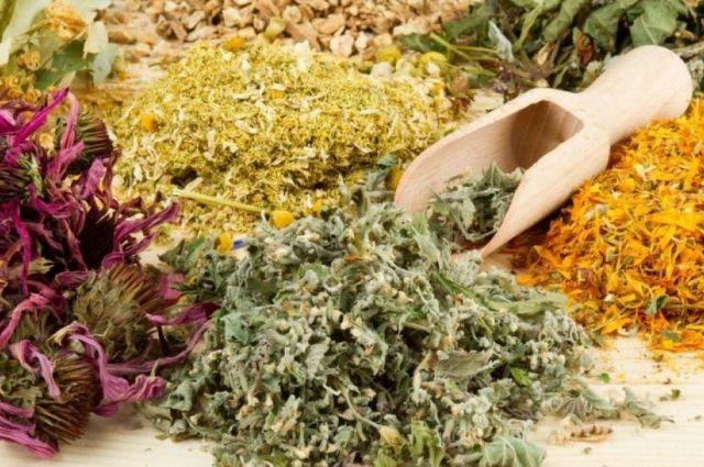 Сезон трав. Что нужно знать, отправляясь на сбор лекарственных растений