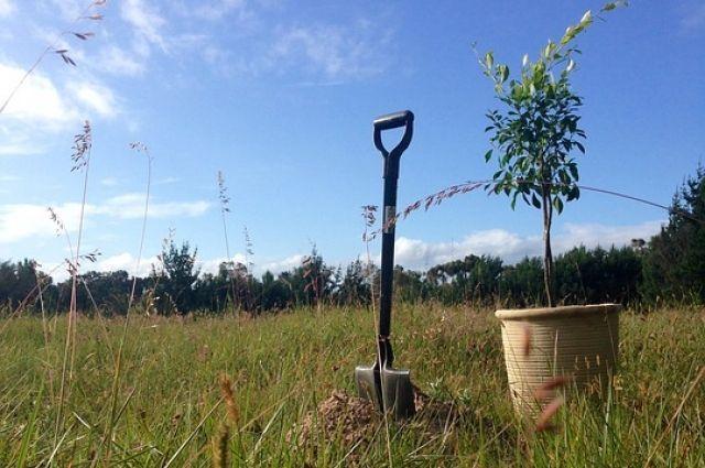 Лесхозы ежегодно высаживают около 5 млн саженцев.
