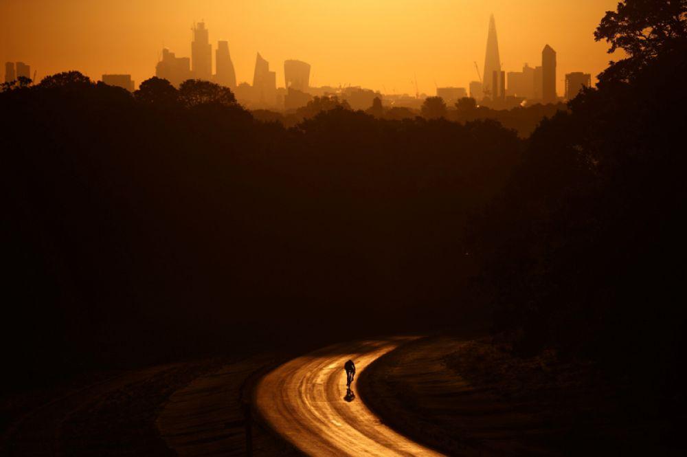 Велосипедист едет по Ричмонд-парку в Лондоне ранним утром.