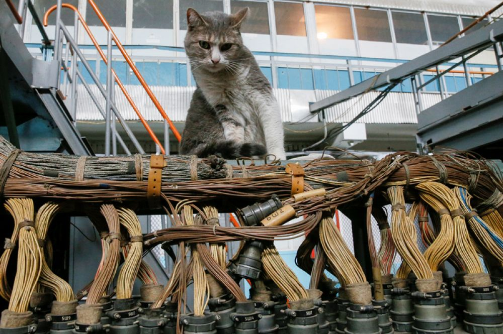 Кот на летно-испытательной базе авиационного завода имени Антонова в Киеве.