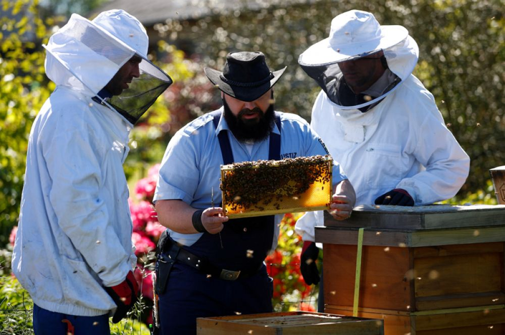 Пчеловод-любитель и по совместительству тюремный охранник вместе с двумя заключенными принимают участие в проекте тюрьмы в городе Лайхлинген, посвященному пчеловодству.