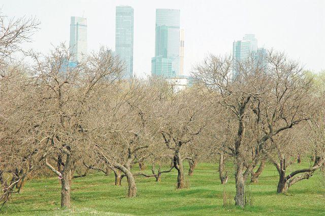Яблоки уже никто не ест, но сад, посаженный пионерами, – отличное место для прогулок.