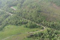 Уничтожен лес и разрушены села: под Житомиром пронесся мощный торнадо