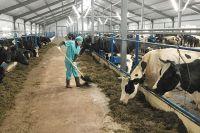 Безработные новосибирцы создают сельскохозяйственные фермы.
