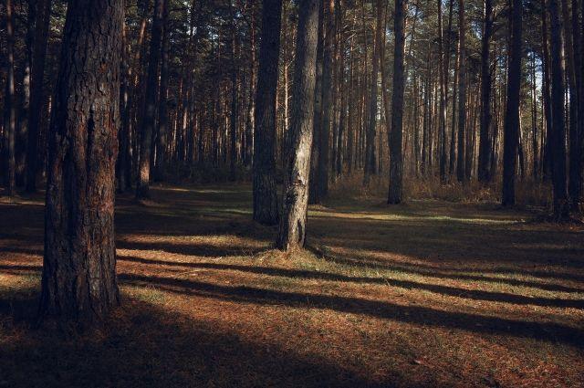 В лес за черемшой отправились пятеро местных жителей.