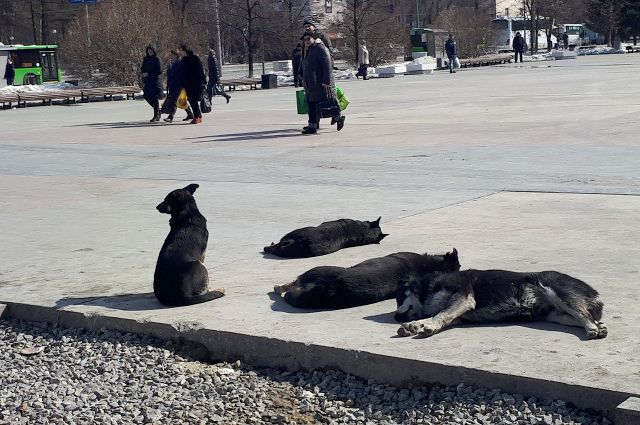 В Тюмени волонтеры собирают посылку для бездомных животных