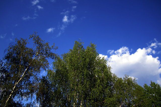 Вместе с чистым воздухом сильный ветер принес и небольшое понижение температуры воздуха до +14, +16 °C