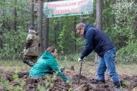 Чтобы высадить молодые сосны, Алексею Текслеру пришлось освоить лопату Колесова.