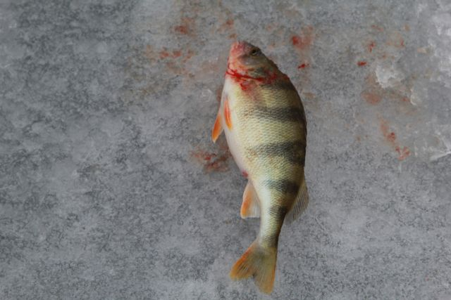 Жизнь пожилого рыбака удалось спасти.