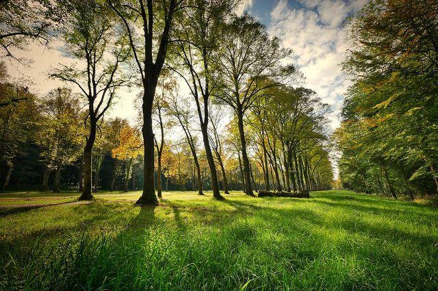 В Гилевской роще появится железное дерево