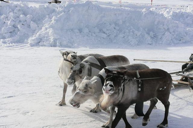 В ЯНАО выделят 138 млн рублей для коренных северян