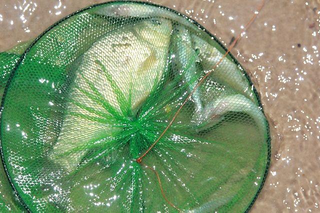 У нарушителей изъяли рыболовные сети.