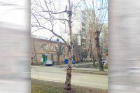 Берёза с удалённой кроной во дворе по улице Смирных в Челябинске.