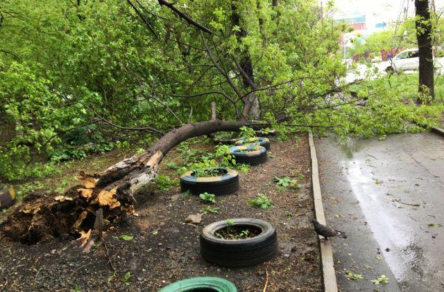 Автомобили следует парковать вдали от деревьев, опор ЛЭП и слабо укрепленных конструкций.