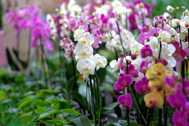 Выставка орхидей собрала сотни тюменцев