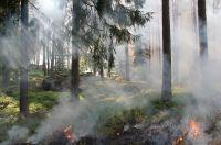 Пожар потушили местные жители