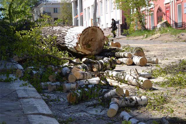 Липы, рябины, берёзы, тополя – с десяток старых, но ещё крепких деревьев пошли под нож бензопилы.Вместо срубленных деревьев высадят новые.