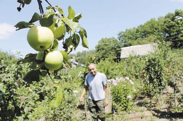 Без кадастра и сочного яблока на даче не вырастишь.