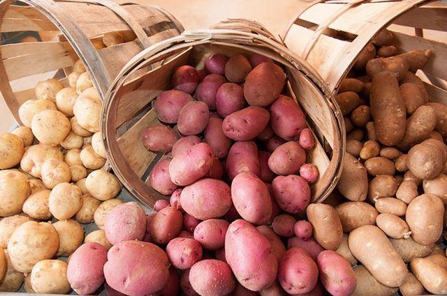 В Украину в этом году импортируют рекордное количество картофеля
