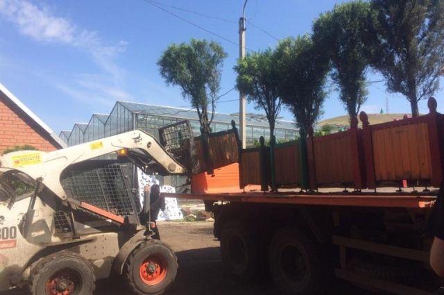 В краевой столице в этом году установят 141 пальму и 56 туй.
