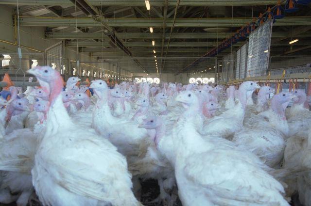 В Пензенской области при финансовой поддержке Россельхозбанка состоялось открытие птицеперерабатывающего завода группы компаний «Дамате».
